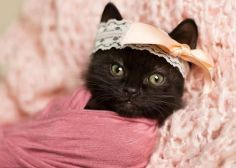 La fotógrafa que toma retratos de recién nacidos... de gatitos recién nacidos...