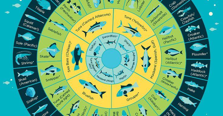 25 b sta mercury in fish id erna p pinterest for Mercury in fish chart