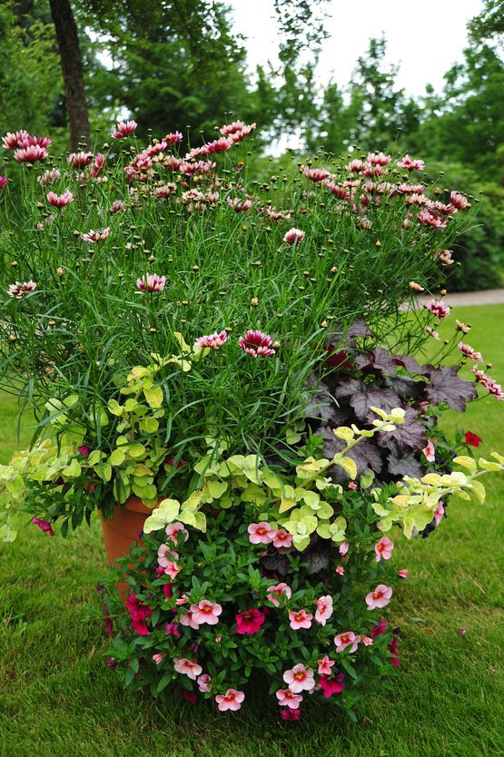 Potted Garden Flowers 293 best container gardening , hanging baskets images on pinterest