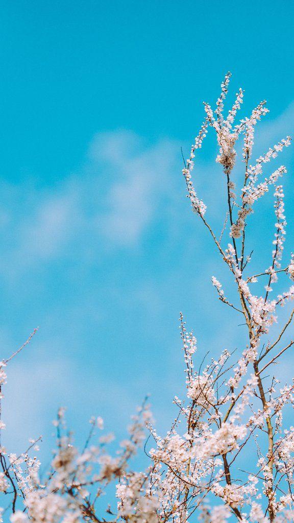 Top Ten Best Spring 2020 Wallpapers For Iphone X And Iphone 11 Blue Sky Wallpaper Aesthetic Wallpapers Blue Aesthetic Pastel Spring wallpaper iphone 11