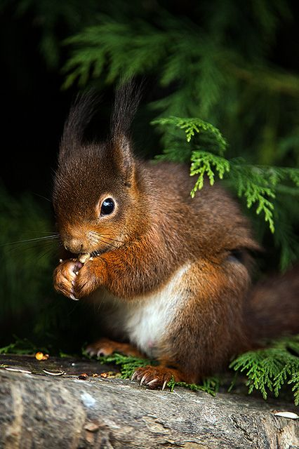 British Wildlife Centre 13/03/13 by Dave learns his Dig SLR?, via Flickr