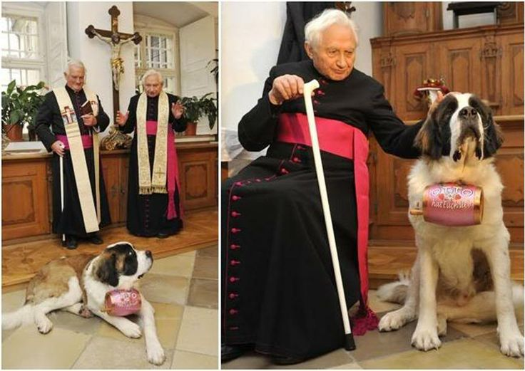 """""""Georg Ratzinger, brother of Pope Benedict XVI, recently gave his  blessing to Otto, a splendid St. Bernard who will be used as a 'catastrophe dog""""'...."""