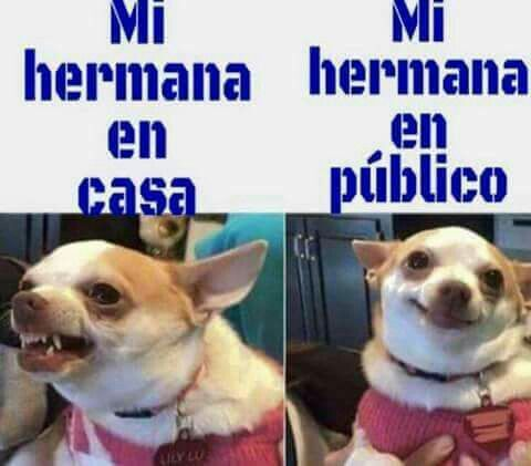 4903c8d43ac876bcb53f9daa89d36f19 humor 398 best ¡spanish 1! images on pinterest spanish classroom