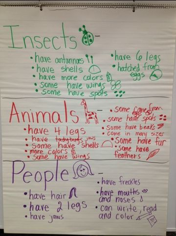 Kindergarten Insect Theme compare... great way to synthesize all that we have learnt