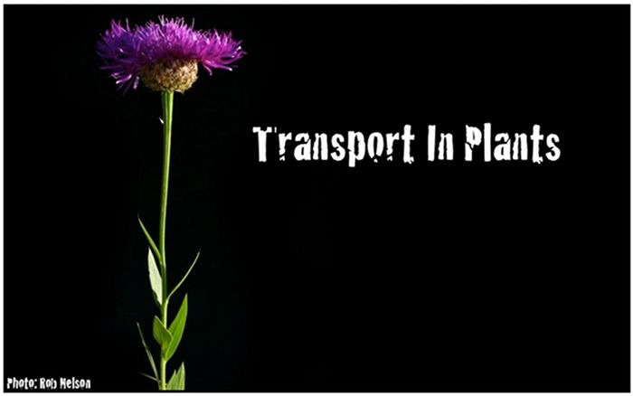 TRANSPORT- GET MOVIN' Transport is the movement of things from one place to other. It happens all the time. For example, you might transport the stinky bag of trash in your kitchen to the curb for garbage pickup. Or you might be transported from the bus stop to school or work. Transport happens inside our …