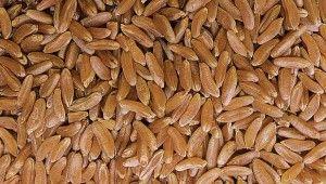 Kamut Khorasan Wheat's Health Benefits and Kamut Nutrition | fitbottomedgirls.com