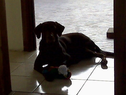 La bella Kanela con su juguete