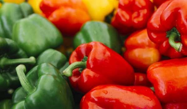 The Post فوائد الفلفل الرومي للجسم وأشهر الاستخدامات حبحر بارد Appeared First On كل يوم معلومة طبية Zero Calorie Foods Stuffed Peppers Best Diet Foods