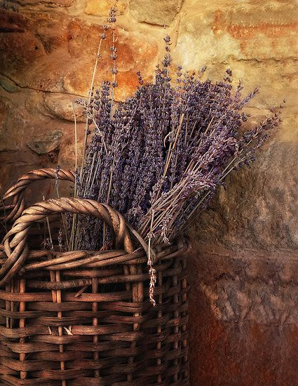 French Basket: Lavender Gardens, Lavender Farms, Lavender Dreams, Lavandayla Provenza, French Country, Country Life, Gardens Design, Dry Flowers, Lavender Baskets