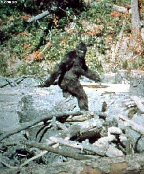 """On October 20th 1967, Roger Patterson and Robert Gimlin captured a  Sasquatch with 16mm camera at Bluff Creek, California. Phillip Morris said that he sold an ape suit to Patterson via mail-order in 1967, thinking it was going to be used in what Patterson described as a """"prank""""."""