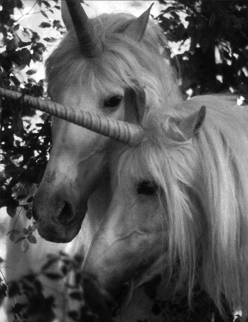 Unicornios.