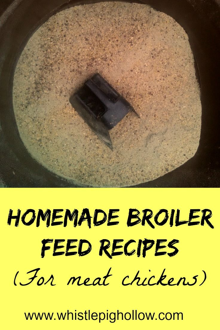 Homemade Broiler Feed Recipes | Whistle Pig Hollow