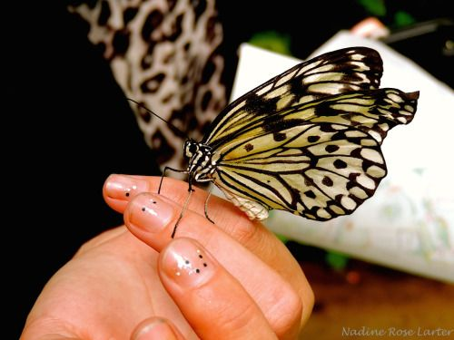 Beautiful Butterflu