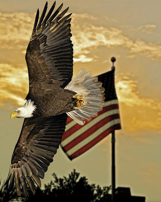 Click this link to view one of the best military salutes by a college band.     http://www.youtube.com/watch_popup?v=MjPmmCtHmfE  Eagle with US flag - Sasse Photo