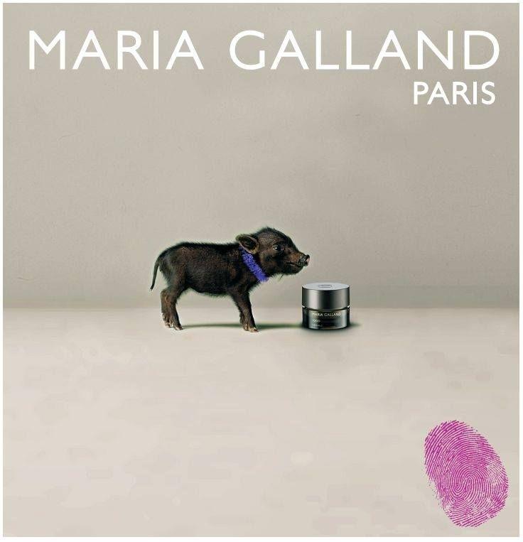 maria galland pig