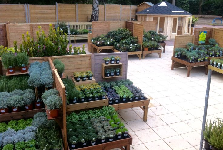 Plant Area, Squires Garden Centre Chertsey