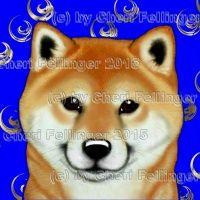 Mount St. Helen WA Shiba Inu & Dogs For Sale | Little River Show Dogs
