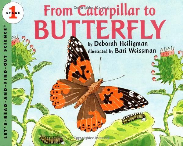 13 besten Butterfly Bilder auf Pinterest | Schmetterlinge, Recycling ...