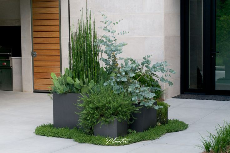 Contemporary lead pots using textural plants including equisetum (horsetail grass), rosmarinus prostrates (trailing rosemary), and eucalyptus.  A Planters design.  Atlanta, GA