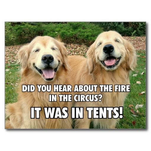 Funny Golden Retriever Circus Fire Joke Postcards by #AugieDoggyStore