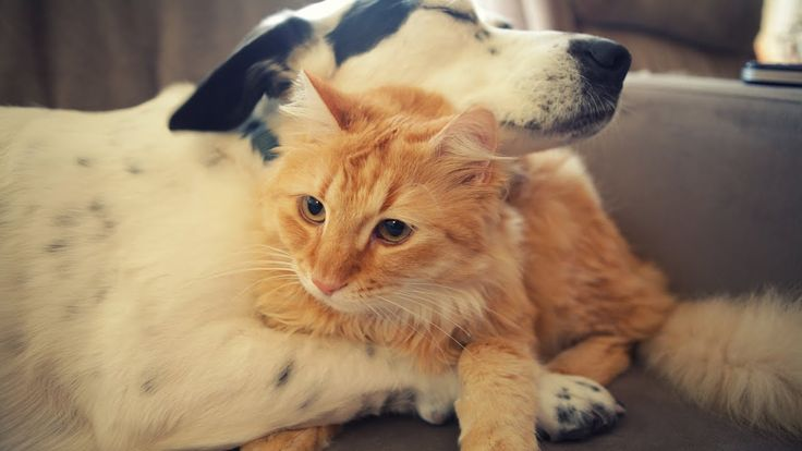 Askthevet how do i train my dog to get along with cats