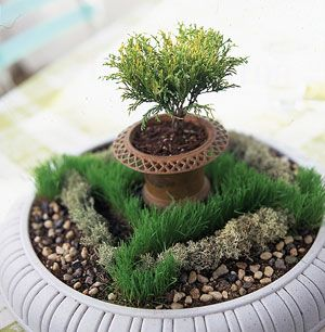 Popular in England, knot gardens consist of low-growing hedges of different plantings that resemble a knot when viewed from above. Create a miniature version in a birdbath or a large urn using grass seed and moss. Top with a small urn to give it a visual focal point.