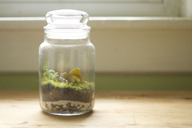 How to make your own terrarium..because we all want a little classic dirt jar