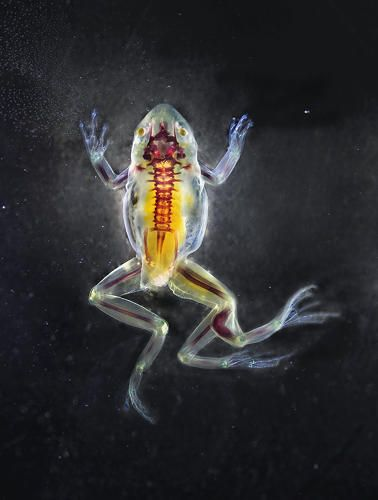 3 | Look At These Horrifying Monster Frogs! | Co.Exist | ideas + impact