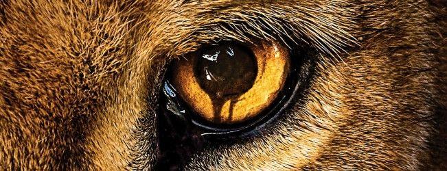 Critique du pilote de la série d'été de CBS #Zoo qui manque de mordant