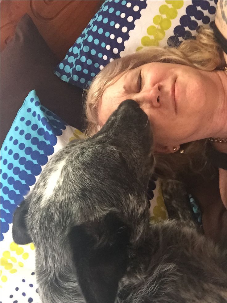 Good morning kisses from my furry boy rocky