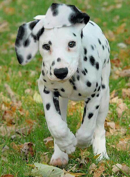Un perrito o un gatito siempre hacen que nuestras vidas sean felices ya que ellos tienen energias positivas y nos quitan la negatividad de nuestras vidas