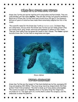 Hawaii's Green Sea Turtles Informational Text, Questions, & PowerPoint (scheduled via http://www.tailwindapp.com?utm_source=pinterest&utm_medium=twpin&utm_content=post27113552&utm_campaign=scheduler_attribution)