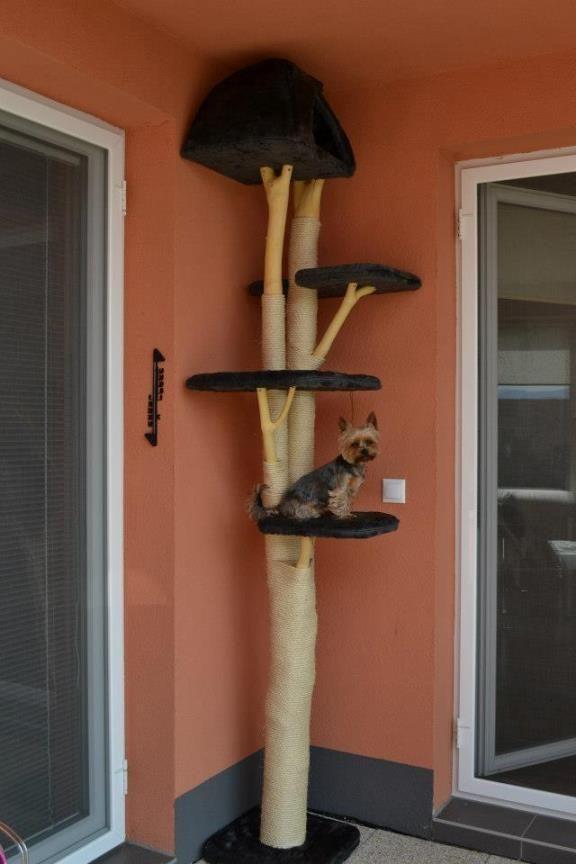 52 besten kratzbaumideen bilder auf pinterest k tzchen die katze und hund katze. Black Bedroom Furniture Sets. Home Design Ideas
