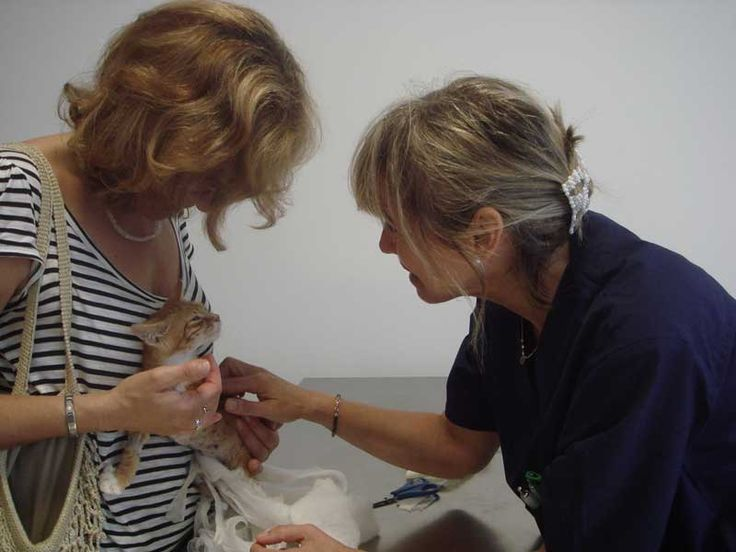 Clinica Veterinaria San Giacomo ha scelto Webee