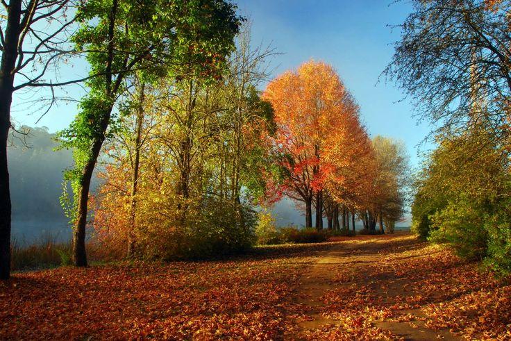 Autumn track in Himeville by Stephen Pryke http://www.n3gateway.com/news5/14/151/Stephen-Pryke/d,detail.htm