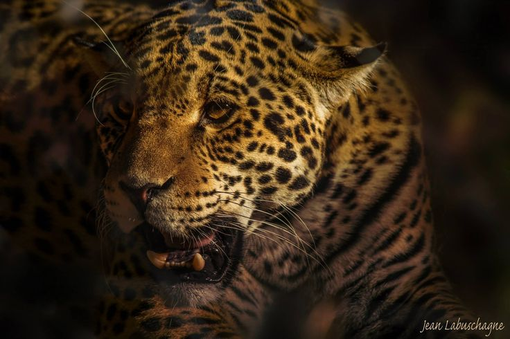 Focused by Jean  on 500px