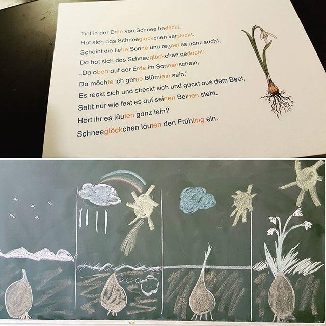 Dieses Gedicht zum Schneeglöckchen haben meine Erstklässler vor Kurzem gelernt. Als Gedächtnisstütze haben wir gemeinsam an der Tafel Bilder zum Gedicht gemalt. Toll an dem Gedicht ist auch, dass man passende Bewegungen zu den einzelnen Zeilen machen kann. #grundschule #primarstufe #erstklässler #instateacher #instalehrer #teachersofinstagram #anfangsunterricht #gedichte #gedichtlernen #lehrerleben