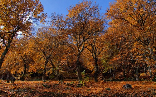 In the forests of Pelion where this time one can not resist to walk hours
