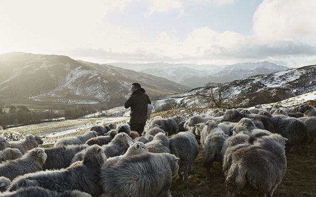 'I've always loved lambing, ever since I used to follow my grandad around, helping him feed the ewes.' PHOTO: James Rebanks