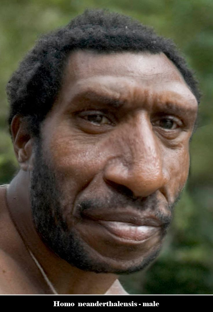 Homo neanderthalensis male... (He reminds me of a famous indian actor, can't help it! )
