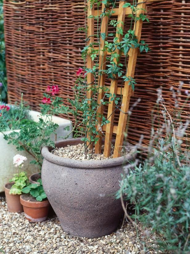 Learn how to grow compact flowering vines, such as jasmine and clematis, in pots at HGTV.com.