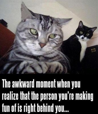 funny cat meme with a striped cat looking over his shoulder at a black and white cat and the caption the awkward moment when you realize tha...