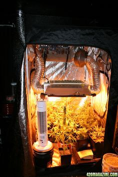 The 4x4 grow tent club http://www.420magazine.com/forums/indoor-soil-cultivation/180203-4x4-grow-tent-club.html