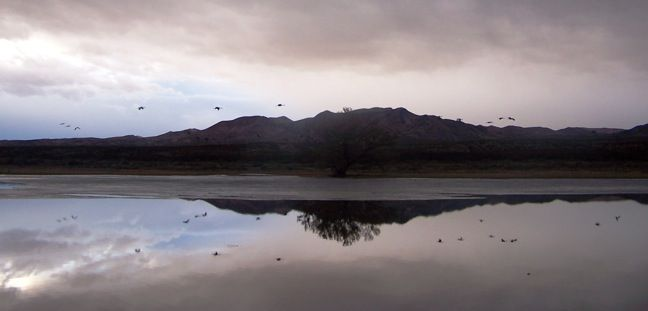 Bosque del Apache, New Mexico | Top 5 Eco-Friendly Tourist Attractions in New Mexico www.greenglobaltravel.com