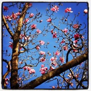 Springtime Blossoms @Golden Gate Park, SF