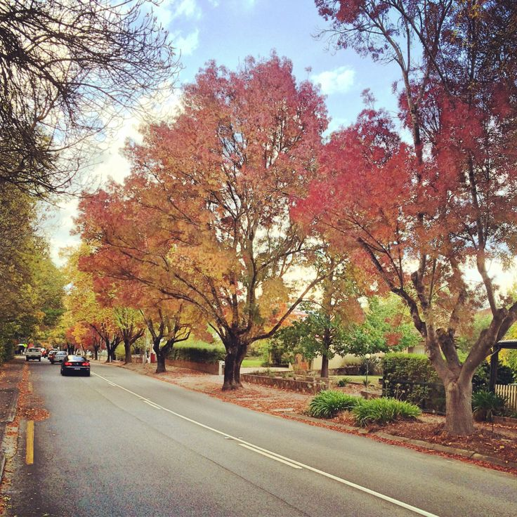 When every leaf is a flower (Hahndorf - Adelaide, South Australia)