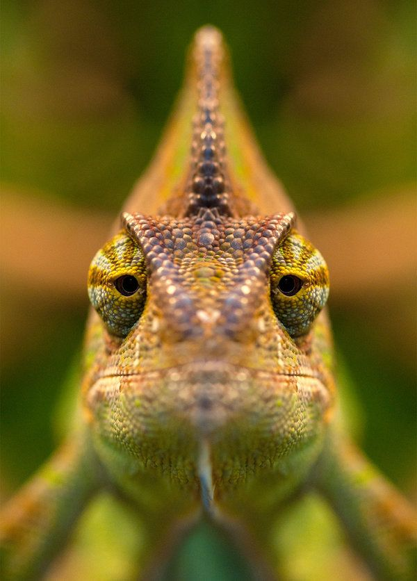eros-addict:  earth-song:ChameleonbyFeasul-Oniisama Monday face…