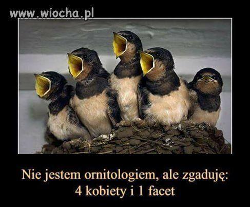Wiocha.pl - absurdy internetu