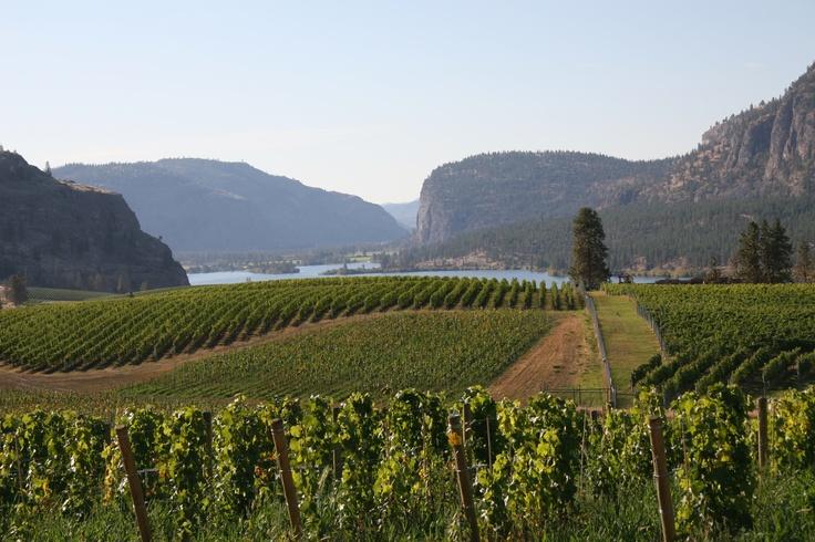 Lake Breeze Winery