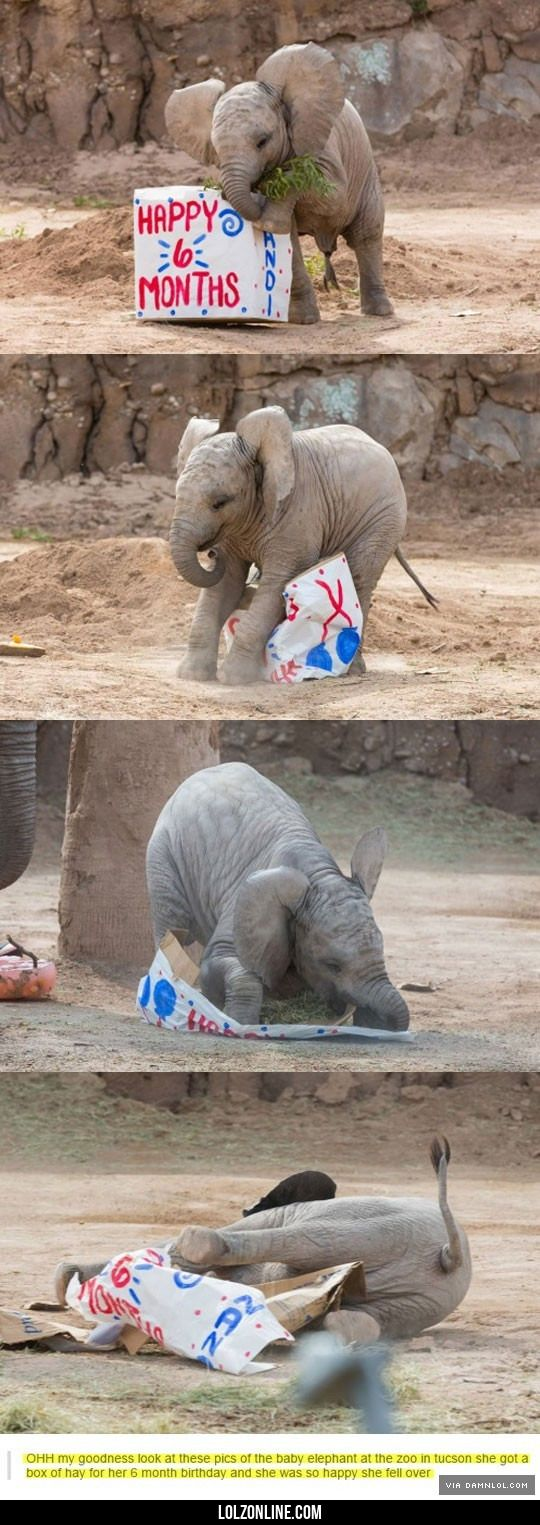Happy Half-Birthday Tiny Elephant#funny #lol #lolzonline